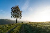 Morgennebel am Weg an der Birke by Ronald Nickel