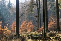 Der Wald an der Waldburghöhe by Ronald Nickel