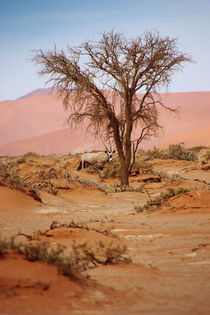 NAMIBIA ... Sossusvlei Oryx by meleah