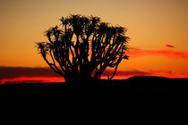 NAMIBIA ... Quiver Tree Sunset von meleah