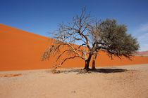 NAMIBIA ... Namib Desert Tree IV von meleah