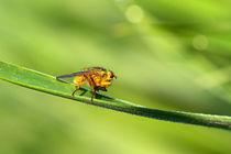 Insektenmakro by Bernhard Kaiser