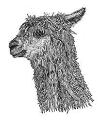 Alpaca von Condor Artworks