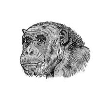 Chimp with a Pearl Earring by Condor Artworks