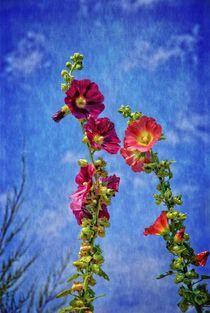 Blüten von Claudia Evans