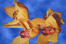 Orchideen by frakn