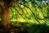 Die Baumschaukel by Claudia Evans