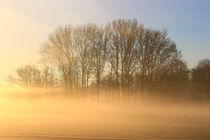 'Bäume in der Nebellandschaft' von Bernhard Kaiser