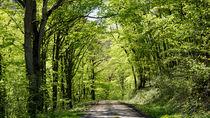 Durch den Frühlingswald von Ronald Nickel