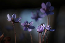 blue von Thomas Matzl
