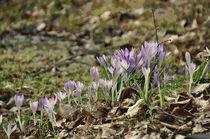Frühling auf der Wiese von alana