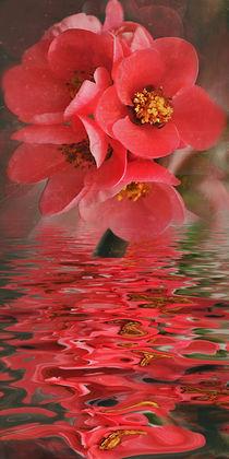 Flower Water - Quittenblütenwasser von Chris Berger