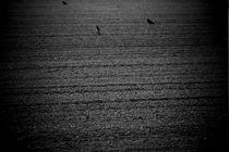 Dunkelfeld by Bastian  Kienitz