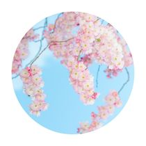 Sakura World by dagino