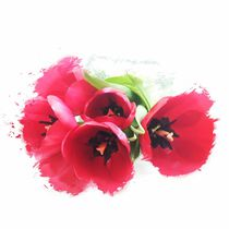 Lively Tulips von inga-rx