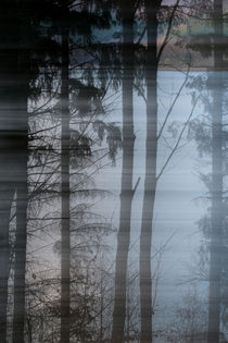 Fading Forest by dagino