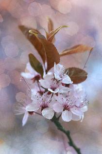 Wilde Kirsche von © Ivonne Wentzler