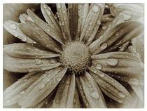 Flower - vintage by Peter Bergmann