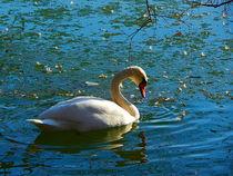 swan on ice - grace by Zarahzeta ®