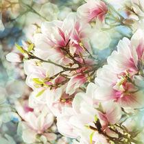 Magnolie von © Ivonne Wentzler