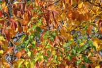 Autumn colors by Edina Ganic