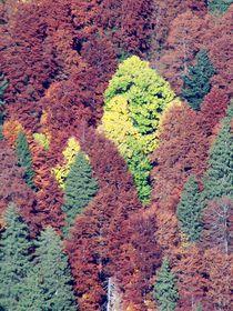 Herbstwald by art-dellas