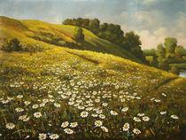 Daisies by Dusan Vukovic