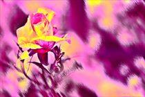 Abstrakt Rose  von Sandra  Vollmann