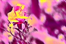 ' Abstrakt Rose ' by Sandra  Vollmann