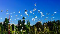 Birds by Airton Pires Junior