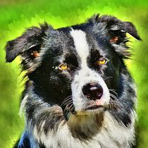 Digital Painting Border Collie by kattobello