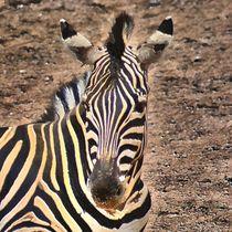 Digital Painting Zebra von kattobello