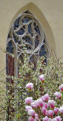 Magnolienblüte vor der Evangelischen Stadtkirche von kattobello