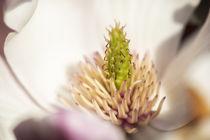 Flowers 050317 by Mario Fichtner