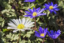 Flowers 051217 by Mario Fichtner