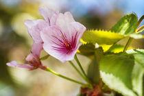 Flowers 054617 by Mario Fichtner