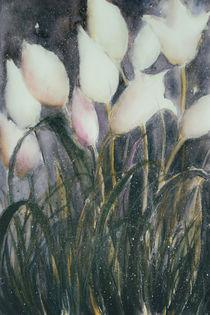 White Tulips - Weiße Tulpen von Chris Berger