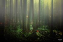 mist over the moor von micha gruenberg