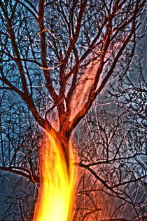 Ostern brennt der Baum von frakn