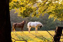 Pferde auf der Koppel by Ronald Nickel