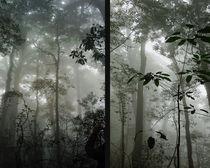 Im tropischen Nebelwald von Hartmut Binder