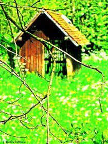 Frische Frühlingsfarben von Sandra  Vollmann