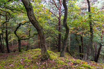Regentag im Wald by Ronald Nickel