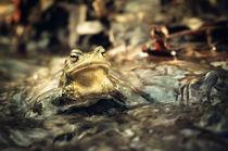 Common toad 2 von tr-design