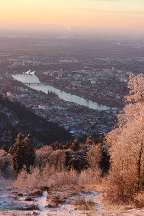 Winterbaum by Lisa Peschel