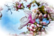 Magnolien  -  Traum by Claudia Evans
