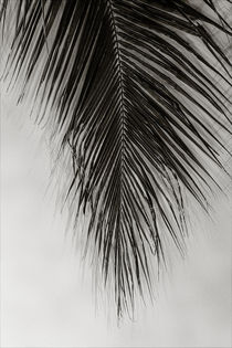 Palm Leaf by oliverp-art