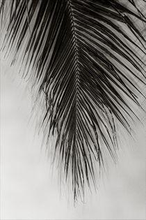 Palm Leaf von oliverp-art