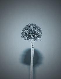 Seed Head von David Bishop