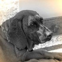 Nostalgie Gebirgsschweißhund by kattobello